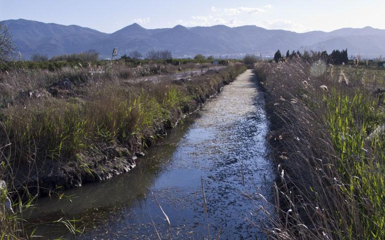 R4. Marjal de Pego-Oliva y ríos Bullens y Racons