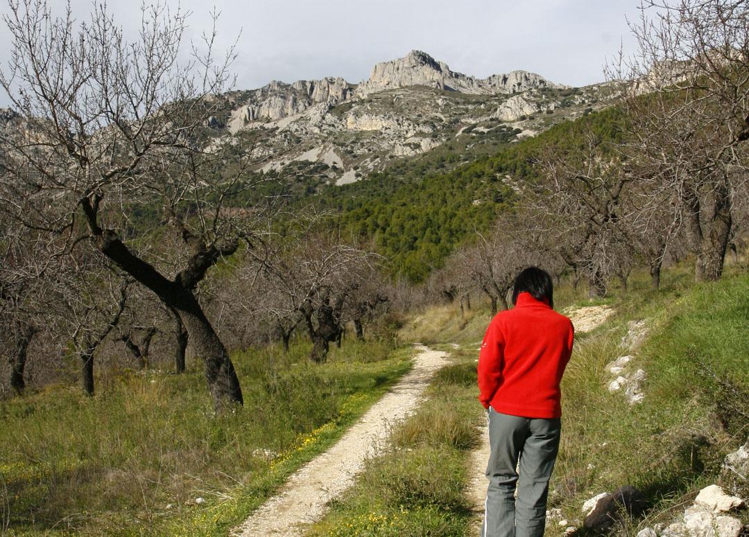 El manantial o Font de Mela, ubicado en el Barranco de Monesillo o Mela