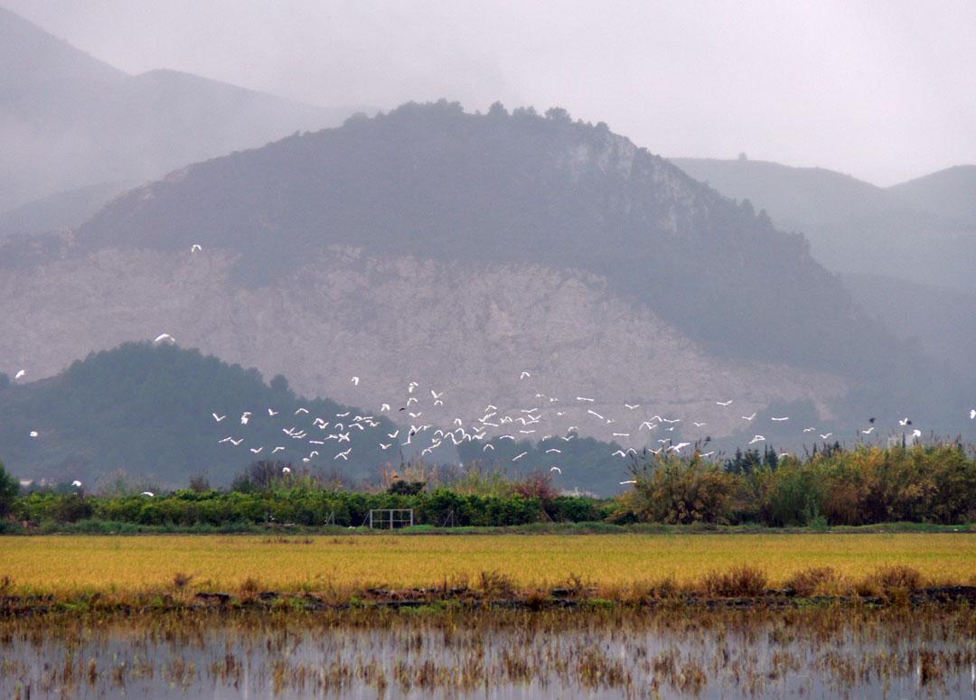 Observatorio de aves de la marjal
